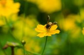A bee  — Stock Photo