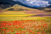 Blooming fields in the Sibillini mountains — Stock Photo