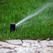 Garden automatic irrigation system, working sprinkler — Stock Photo #67302495