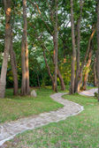 Stone path between green trees — Stock Photo