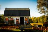 The Pumpkin Farm — Stockfoto