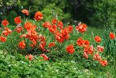 Czerwony roślin chwasty i truskawki — Zdjęcie stockowe
