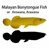 Malayan Bonytongue fish — Stock Vector