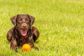 Dogs playing in a wet park — Stock Photo
