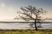 Sunrise and tree branches with birds on the shore waiting for lo — Stock Photo