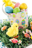 Easter bucket with colored eggs, candy and yellow chicks — Stok fotoğraf