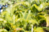 Background blur — Stock Photo
