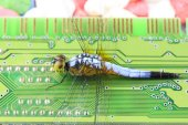 Blue dragonfly on RAM — Foto Stock