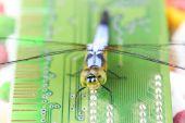 Single Blue dragonfly on RAM — Foto Stock