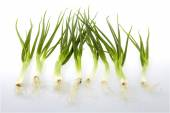 Green onion chives — Foto de Stock
