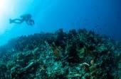 Various hard coral reefs in Gorontalo, Indonesia underwater photo. — Stock Photo