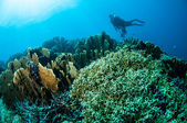 Various hard coral reefs in Gorontalo, Indonesia underwater photo. — Stock Photo