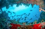 Wreck and fishes swim in Gili, Lombok, Nusa Tenggara Barat, Indonesia underwater photo — Stock Photo