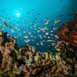 Various reef fishes swimming above the coral reefs in Gili, Lombok, Nusa Tenggara Barat, Indonesia underwater photo — Stock Photo #59407769
