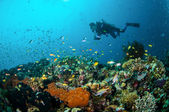 Diver and various reef fishes swim above coral reefs in Gili Lombok Nusa Tenggara Barat Indonesia underwater photo — Stockfoto
