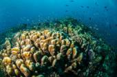 Various coral reefs in Gili, Lombok, Nusa Tenggara Barat, Indonesia underwater photo — Stock Photo
