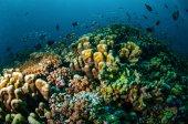 Varios arrecifes de coral en Gili, Lombok, Nusa Tenggara Barat, Foto Submarina Indonesia — Foto de Stock