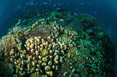 Various coral reefs and fishes in Gili, Lombok, Nusa Tenggara Barat, Indonesia underwater photo — Stock Photo