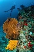 Diver and seafan in Gili, Lombok, Nusa Tenggara Barat, Indonesia underwater photo — Stock Photo