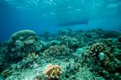 Various coral reefs in Derawan, Kalimantan, Indonesia underwater photo — Stock Photo