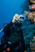 Diver taking picture of tunicates in Derawan, Kalimantan, Indonesia underwater photo — Stock Photo
