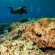 Постер, плакат: Diver and mushroom leather corals in Banda Indonesia underwater photo