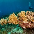 Diver and various soft coral in Banda, Indonesia underwater photo — Stock Photo #59514071