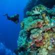 Divers, mushroom leather coral, various coral reefs in Banda, Indonesia underwater photo — Stock Photo #59572725