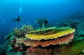 Diver and various hard coral reefs in Banda, Indonesia underwater photo — Stock Photo