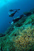 Divers and various hard coral reefs in Banda, Indonesia underwater photo — Stock Photo