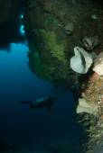 Diver, sponge, coral reef in Ambon, Maluku, Indonesia underwater photo — Stock Photo