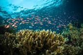 Scuba diving giant sponge bunaken sulawesi indonesia underwater photo — Stock Photo