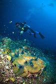 Scuba diving above coral below boat bunaken sulawesi indonesia underwater photo — Stock Photo