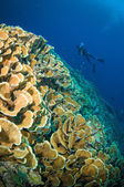 Scuba diving above coral below boat bunaken sulawesi indonesia underwater photo — Stock Photo