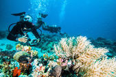 Diver take a photo upon coral kapoposang indonesia scuba diving — Stock Photo