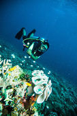 Scuba diving diver kapoposang sulawesi indonesia underwater — Stock Photo