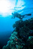 Sun shine scuba diving diver kapoposang sulawesi indonesia underwater — Stock Photo