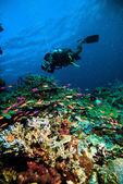 Diver take a photo video upon coral kapoposang indonesia scuba diving — Stock Photo