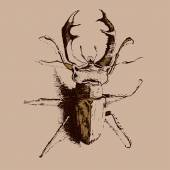 Illustration with colored beetle deer — Wektor stockowy