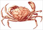 Illustration with a large crab — Stock Vector