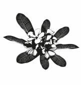 Fleur de frangipanier — Vecteur