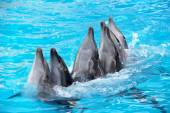 Six Dolphins — Stock Photo