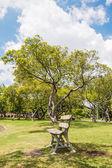 Chair in garden blue sky background thailand — Stockfoto