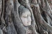 начальник песчаника будды в корни деревьев в wat mahathat, ayut — Стоковое фото