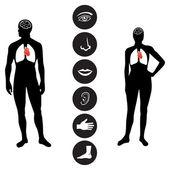 Medical Human body part icon — Stock Vector