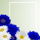 矢量白色背景与花洋甘菊、 矢车菊 — 图库矢量图片