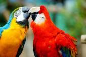Kissing Birds — Stock Photo