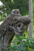 Crab-eating macaque on dragon statue — Stock Photo