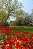 Garden of Topkapi Palace — Stock Photo