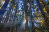 Sunrays shining through the morning mist. — Stock Photo